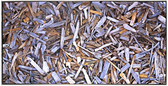 """Driftwood 1"" Digital Print on Canvas"