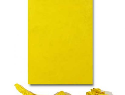 Lemon Yellow and Encaustic Wax Installation