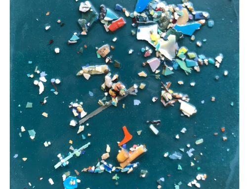 Pacific Garbage Patch Study #15